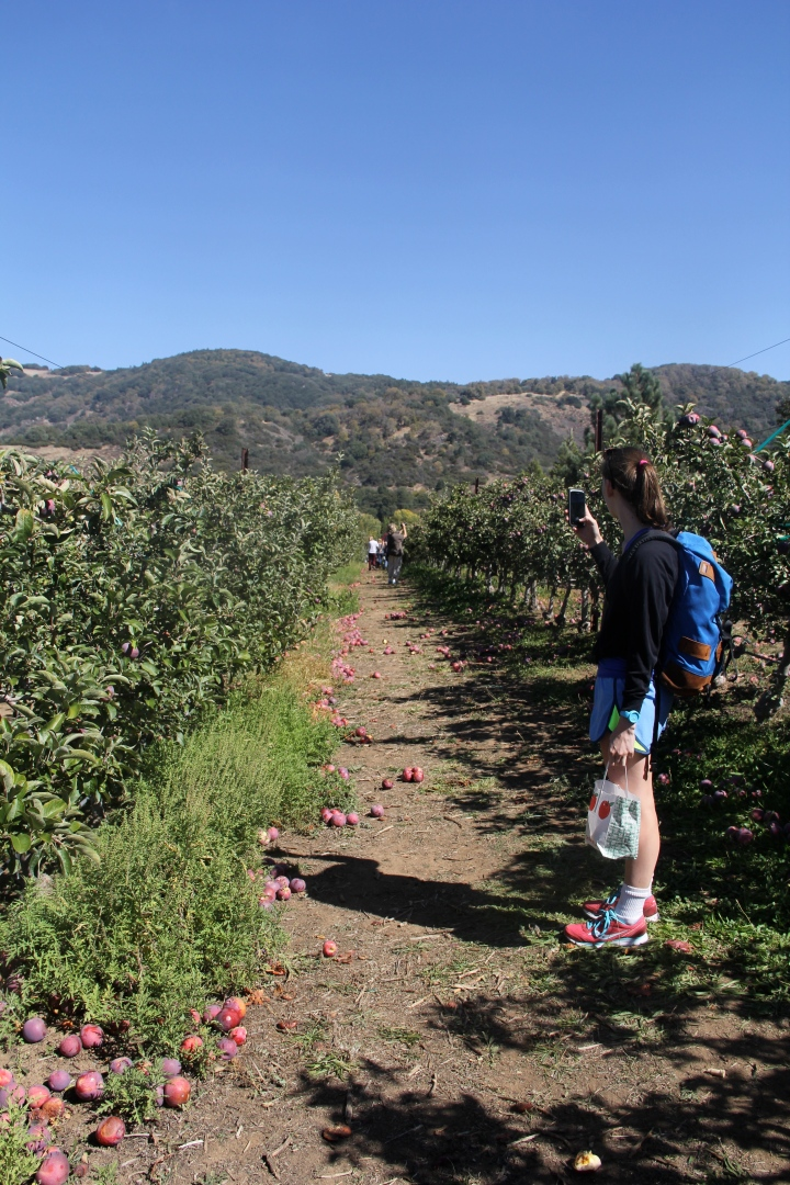 Julian: Best Place to Hike, Worst Place to ApplePick